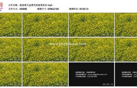 4K实拍视频素材丨航拍春天金黄色的油菜花田