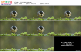 4K实拍视频素材丨一只小鸟在树枝上觅食