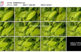 高清实拍视频素材丨移摄嫩绿的树叶