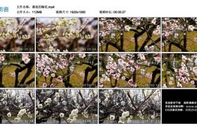 高清实拍视频丨漂亮的梅花