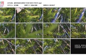 高清实拍视频素材丨旋转仰拍阳光照射下竹林中的竹子和竹叶