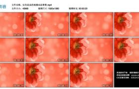 高清动态视频丨红色花朵的浪漫动态背景