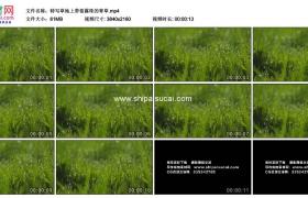 4K实拍视频素材丨特写草地上带着露珠的青草