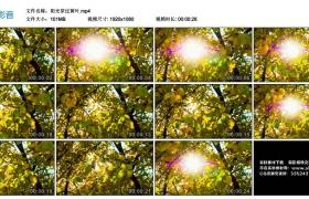 高清实拍视频素材丨阳光穿过黄叶