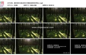 高清实拍视频素材丨森林里阳光透过树木空隙射进树林的草地上