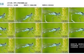 高清实拍视频丨野草上停留的蜻蜓