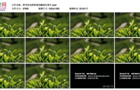 高清实拍视频丨特写阳光照射着的嫩绿色茶叶