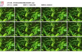 高清实拍视频素材丨特写绿色的树枝间蠕虫啃食树叶