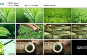 【高清实拍素材】茶叶-采茶-泡茶-茶道