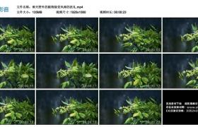 高清实拍视频丨雨天野外的植物接受风雨的洗礼