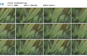【高清实拍素材】阳光透过青草叶