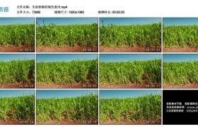 高清实拍视频素材丨生机勃勃的绿色麦田