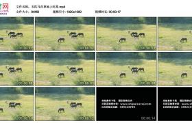 高清实拍视频丨五匹马在草地上吃草