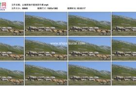 高清实拍视频素材丨山地牧场中悠闲的牛群