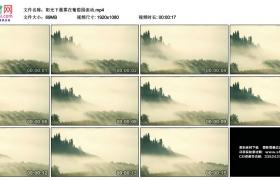 高清实拍视频丨阳光下晨雾在葡萄园流动