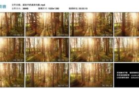 【高清实拍素材】斜阳中的森林光影