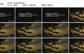 [高清实拍素材]阳光透过松树