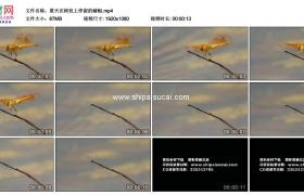 高清实拍视频素材丨夏天在树枝上停留的蜻蜓