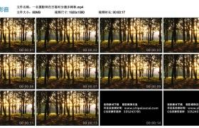 高清实拍视频丨一名摄影师在日落时分漫步树林