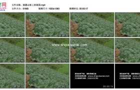 高清实拍视频素材丨摇摄山坡上的菜园