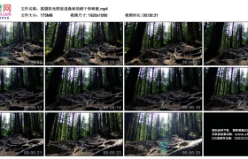 高清实拍视频丨摇摄阳光照射进森林的树干和树根