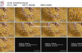 高清实拍视频素材丨特写金黄色的玉米粒