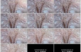 4K实拍视频素材丨春天阳光照射着树枝上樱花花瓣飘飞