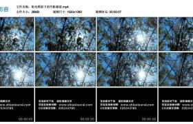 高清实拍视频丨阳光照射下的竹影婆娑