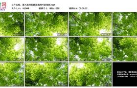 高清实拍视频丨夏天旋转拍摄挂满树叶的绿树