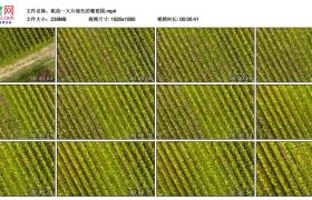 高清实拍视频丨航拍一大片绿色的葡萄园