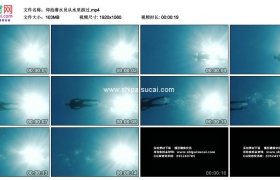 高清实拍视频素材丨水下摄影 仰拍潜水员从水里游过