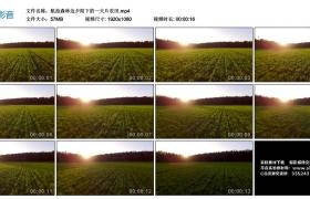 高清实拍视频丨航拍森林边夕阳下的一大片农田