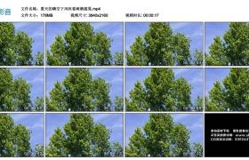 4K视频丨夏天的晴空下风吹着树梢摇晃