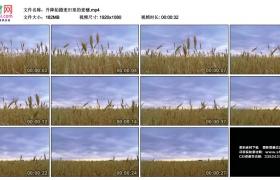高清实拍视频丨升降拍摄麦田里的麦穗