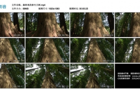 高清实拍视频丨森林里的参天大树