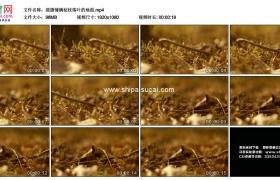 高清实拍视频素材丨摇摄铺满枯枝落叶的地面
