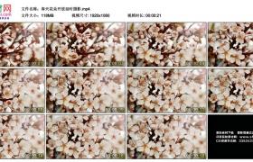 高清实拍视频丨春天花朵开放延时摄影