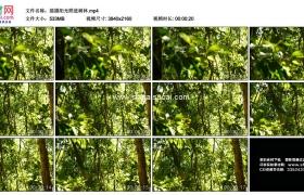 4K实拍视频素材丨摇摄阳光照进树林中的树叶