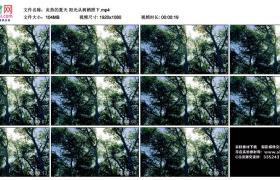 高清实拍视频丨炎热的夏天 阳光从树梢照下