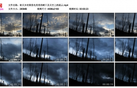 4K视频素材丨秋天乡村黄昏光秃秃的树干及天空上的流云