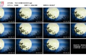 高清实拍视频丨一轮大大的圆月挂在夜空