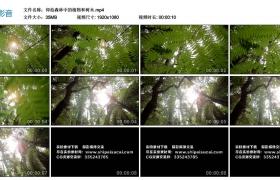 高清实拍视频丨仰拍森林中的植物和树木