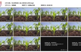 4K实拍视频素材丨阳光照射着土地上绿色的玉米苗