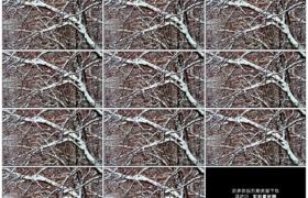4K实拍视频素材丨冬天下雪雪花飘飞到树枝上