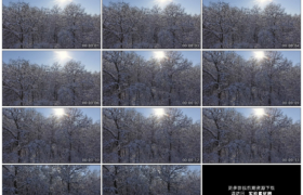 4K实拍视频素材丨航拍冬天阳光照射下积雪的树林