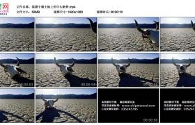 高清实拍视频丨摇摄干涸土地上的牛头骸骨