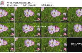 高清实拍视频素材丨阳光下随风摇曳的粉白色花朵