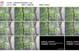 高清实拍视频丨太阳雨 雨水打落在树枝树叶上
