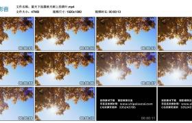 高清实拍视频丨蓝天下拍摄秋天树上的黄叶