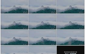 高清实拍视频素材丨浓雾在茂密的森林里飘动